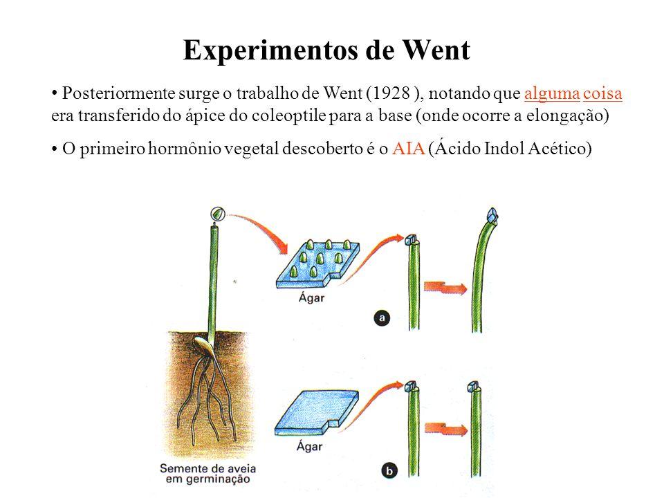 Posteriormente surge o trabalho de Went (1928 ), notando que alguma coisa era transferido do ápice do coleoptile para a base (onde ocorre a elongação)