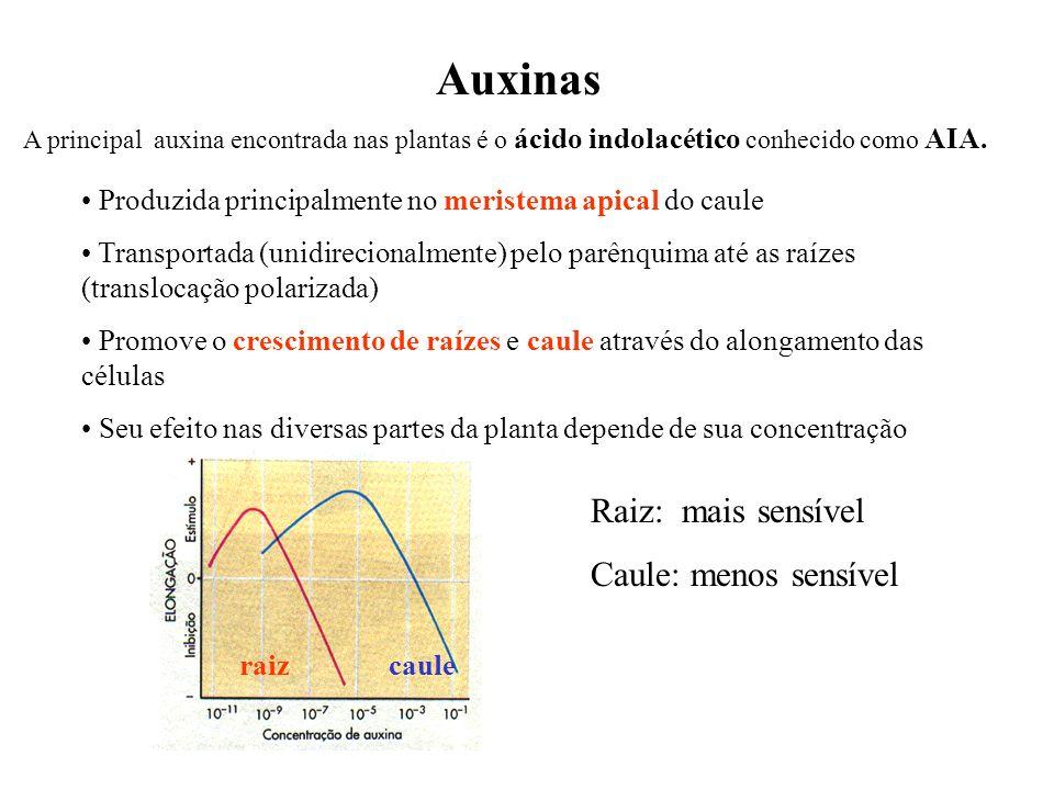 Auxinas A principal auxina encontrada nas plantas é o ácido indolacético conhecido como AIA. Produzida principalmente no meristema apical do caule Tra