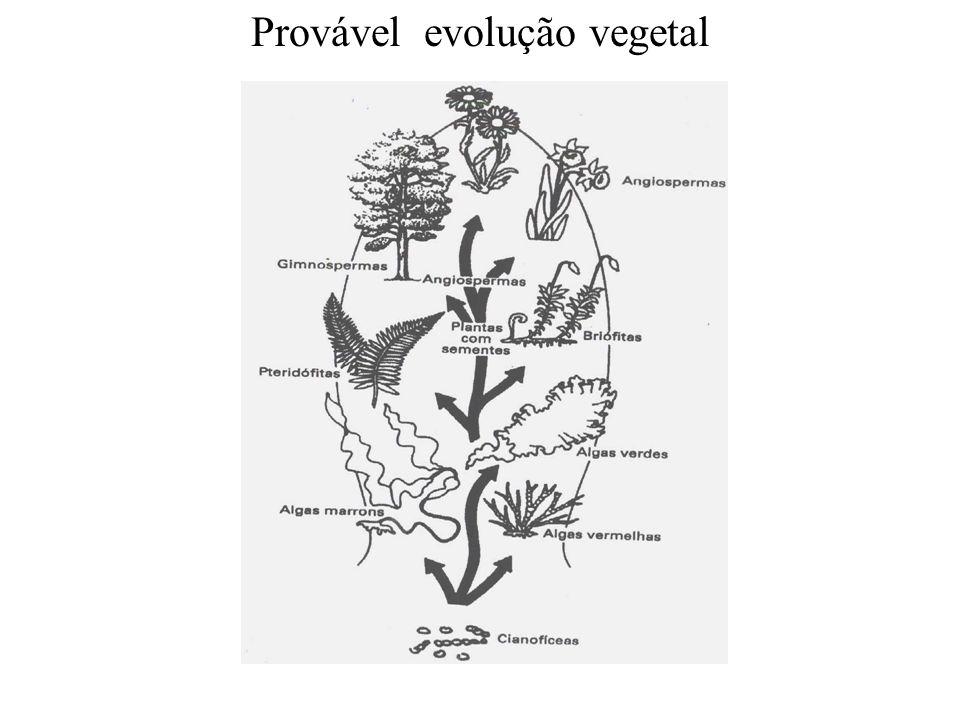 adalberto Allium tuberosum