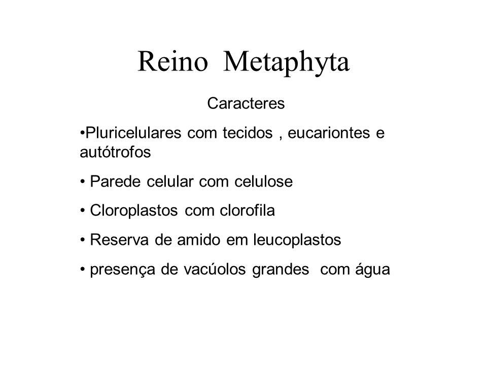 Apresentam os seguintes grupos: 1.Briófitas 2.Pteridófitas 3.Gimnospermas 4.Angiospermas