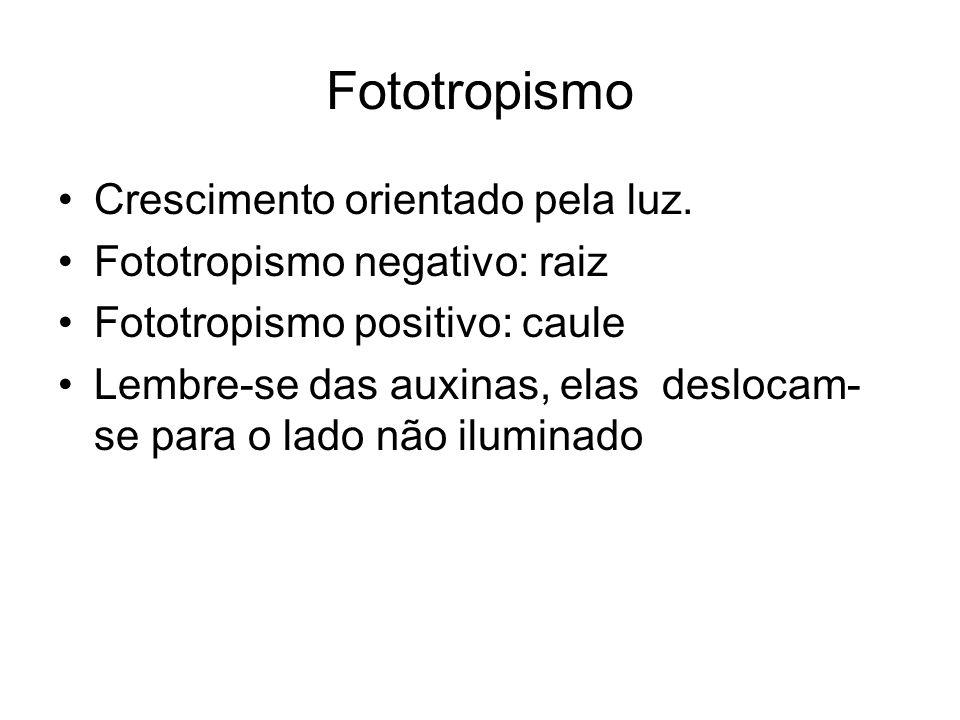 Fototropismo Crescimento orientado pela luz. Fototropismo negativo: raiz Fototropismo positivo: caule Lembre-se das auxinas, elas deslocam- se para o