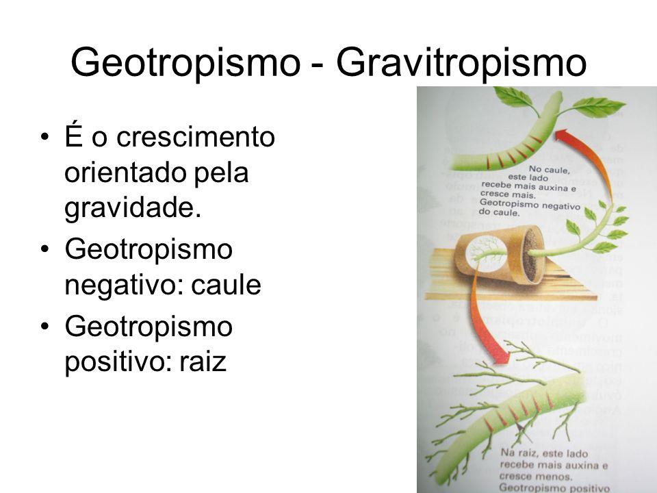 Geotropismo - Gravitropismo É o crescimento orientado pela gravidade. Geotropismo negativo: caule Geotropismo positivo: raiz