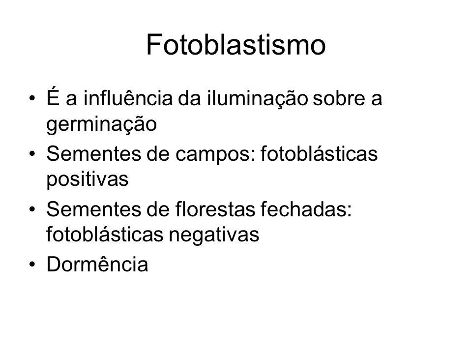 Fotoblastismo É a influência da iluminação sobre a germinação Sementes de campos: fotoblásticas positivas Sementes de florestas fechadas: fotoblástica