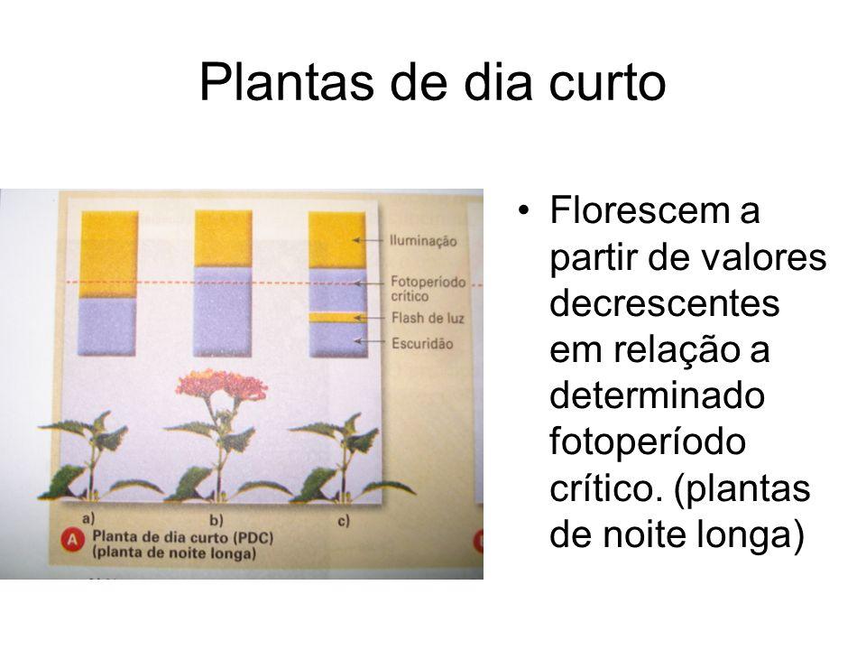 Plantas de dia curto Florescem a partir de valores decrescentes em relação a determinado fotoperíodo crítico. (plantas de noite longa)