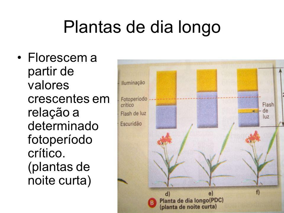 Plantas de dia longo Florescem a partir de valores crescentes em relação a determinado fotoperíodo crítico. (plantas de noite curta)