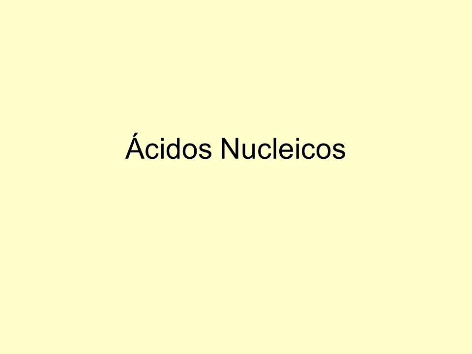 Ácidos Nucléicos: DNA e RNA são polinucleotídeos, formados por cadeias de nucleotídeos Estrutura de um nucleotídeo Base nitrogenada