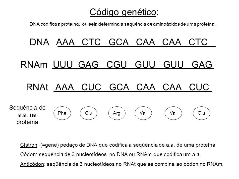 Código genético: DNA codifica a proteína, ou seja determina a seqüência de aminoácidos de uma proteína. DNA AAA CTC GCA CAA CAA CTC RNAm UUU GAG CGU G