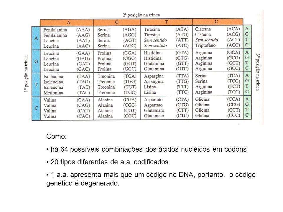 Como: há 64 possíveis combinações dos ácidos nucléicos em códons 20 tipos diferentes de a.a. codificados 1 a.a. apresenta mais que um código no DNA, p