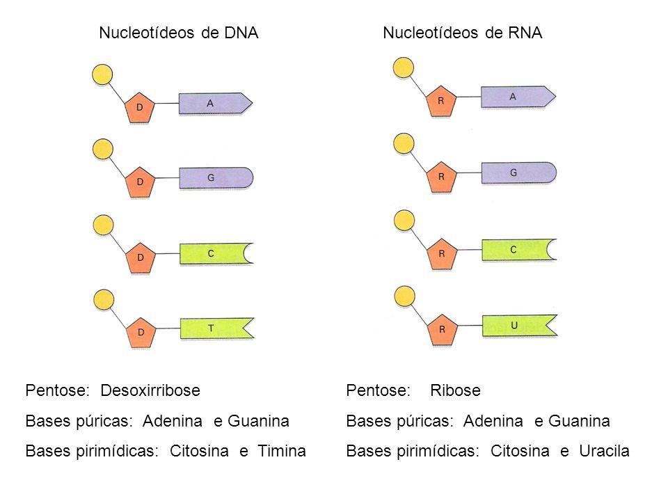 Como: há 64 possíveis combinações dos ácidos nucléicos em códons 20 tipos diferentes de a.a.