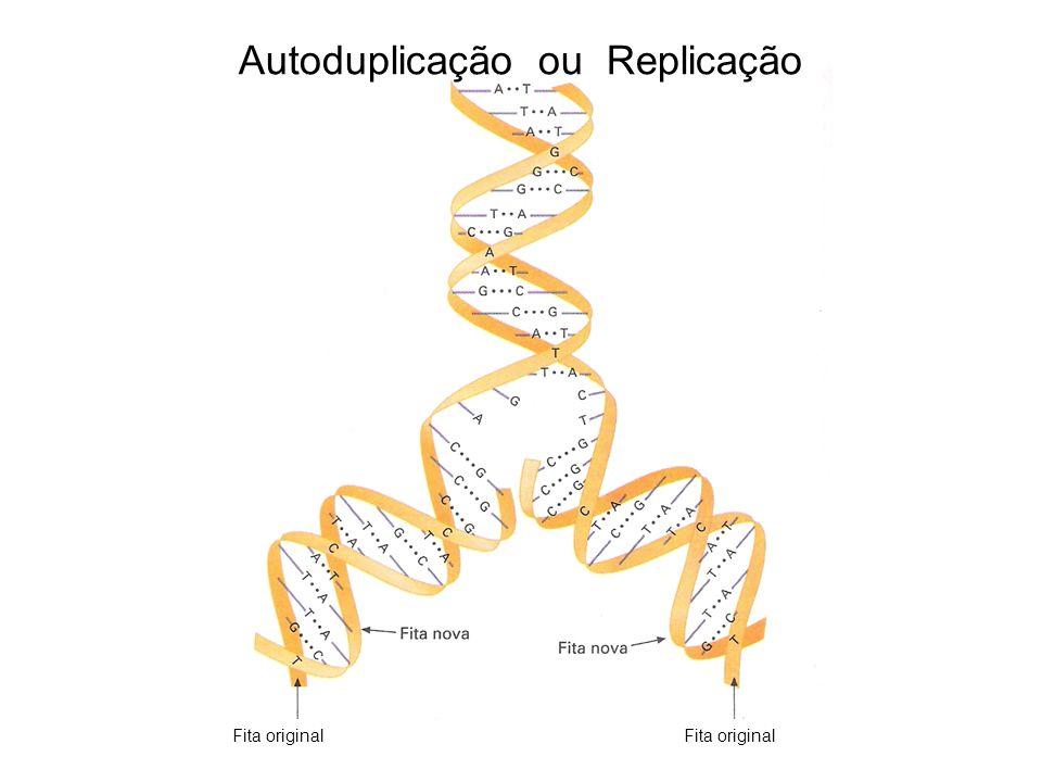 Fita original Autoduplicação ou Replicação