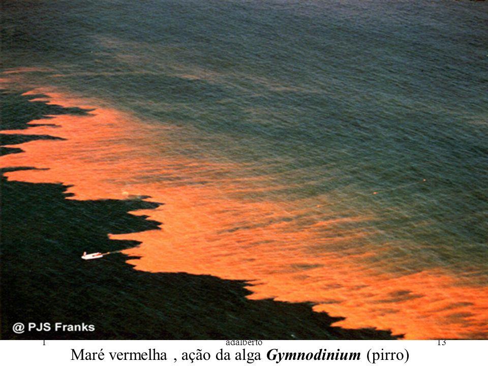 1adalberto13 Maré vermelha, ação da alga Gymnodinium (pirro)