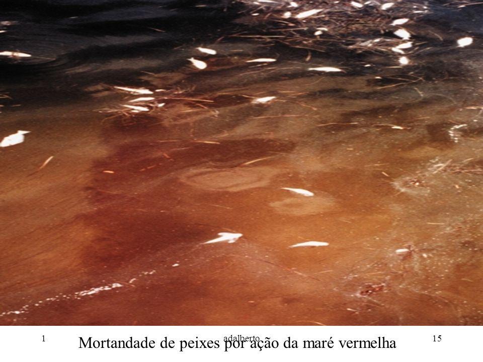 1adalberto15 Mortandade de peixes por ação da maré vermelha