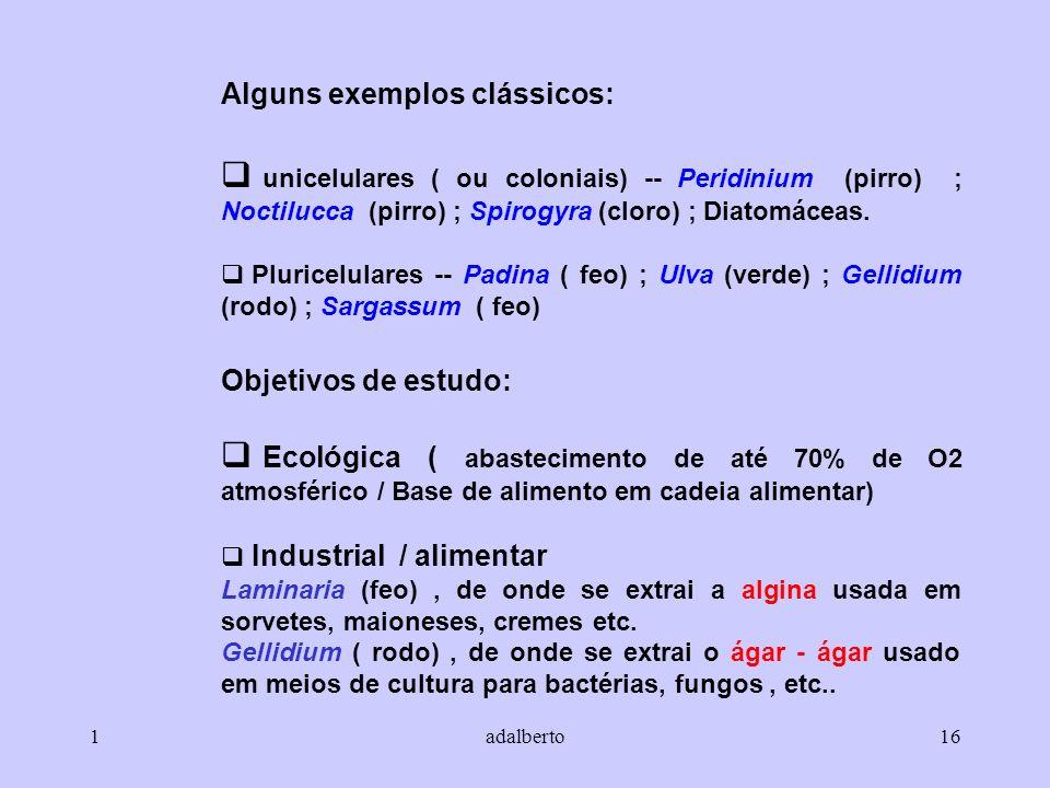 1adalberto16 Alguns exemplos clássicos: unicelulares ( ou coloniais) -- Peridinium (pirro) ; Noctilucca (pirro) ; Spirogyra (cloro) ; Diatomáceas. Plu
