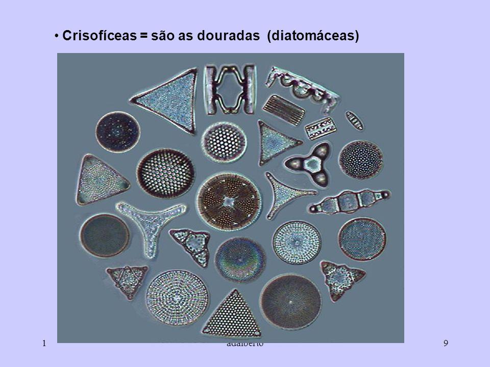 1adalberto9 Crisofíceas = são as douradas (diatomáceas)