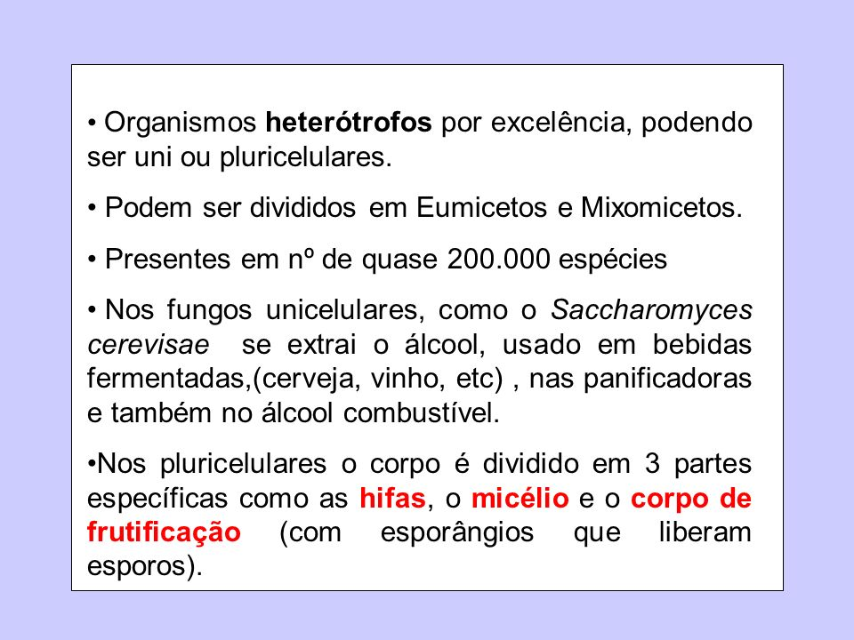 Organismos heterótrofos por excelência, podendo ser uni ou pluricelulares. Podem ser divididos em Eumicetos e Mixomicetos. Presentes em nº de quase 20