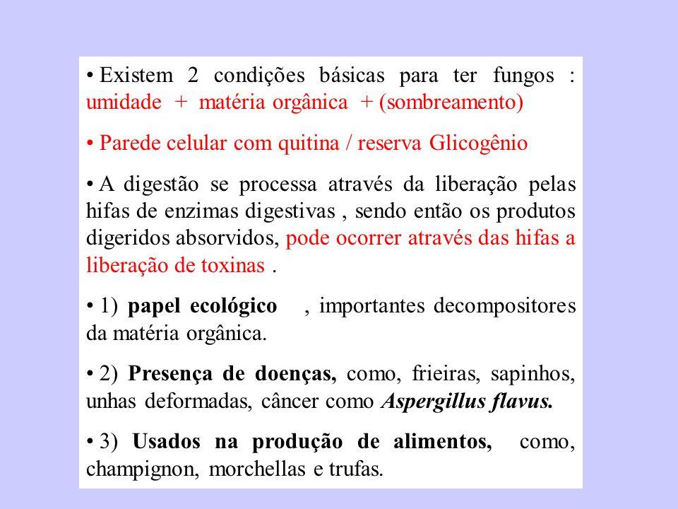 Existem 2 condições básicas para ter fungos : umidade + matéria orgânica + (sombreamento) Parede celular com quitina / reserva Glicogênio A digestão s