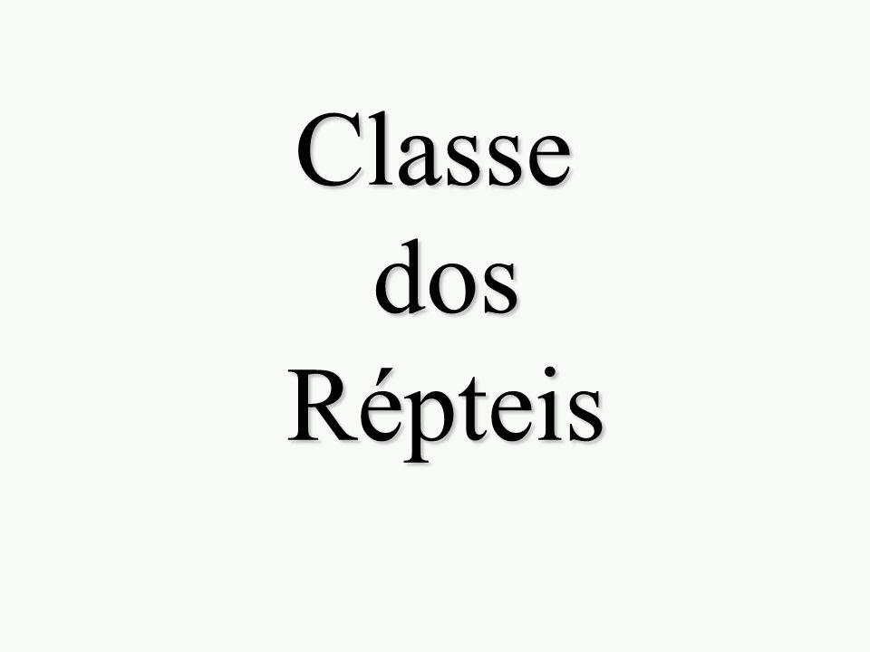 Classe dos Répteis