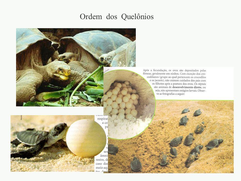 Ordem dos Quelônios