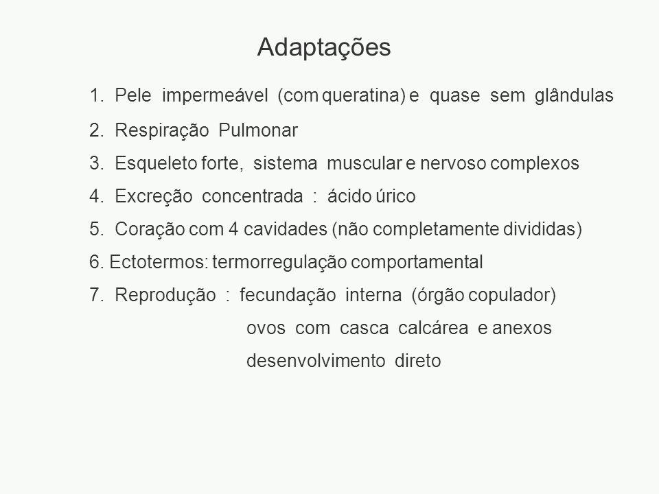Adaptações 1. Pele impermeável (com queratina) e quase sem glândulas 2. Respiração Pulmonar 3. Esqueleto forte, sistema muscular e nervoso complexos 4