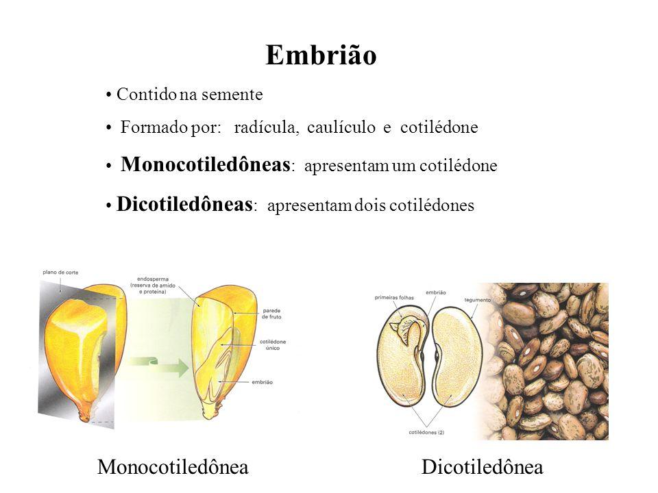 adalberto Embrião Contido na semente Formado por: radícula, caulículo e cotilédone Monocotiledôneas : apresentam um cotilédone Dicotiledôneas : aprese