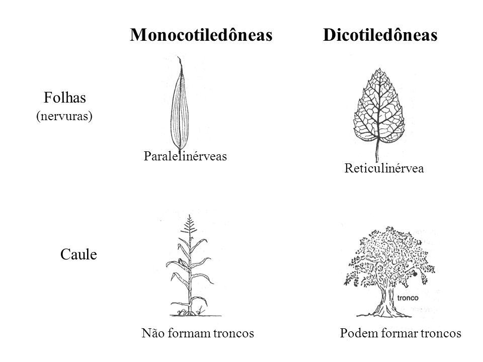 adalberto Monocotiledôneas Dicotiledôneas Folhas (nervuras) Paralelinérveas Reticulinérvea Caule Não formam troncosPodem formar troncos