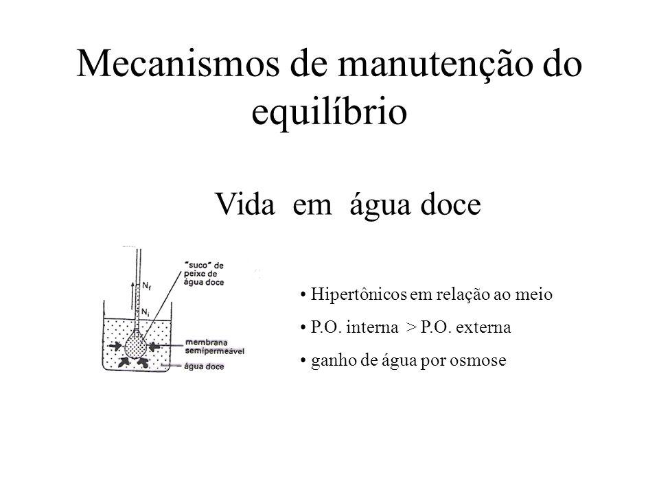 Hipertônicos em relação ao meio P.O. interna > P.O. externa ganho de água por osmose Vida em água doce Mecanismos de manutenção do equilíbrio