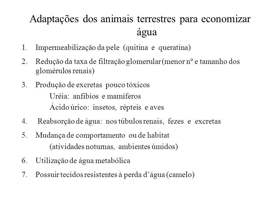 Adaptações dos animais terrestres para economizar água 1.Impermeabilização da pele (quitina e queratina) 2.Redução da taxa de filtração glomerular (me