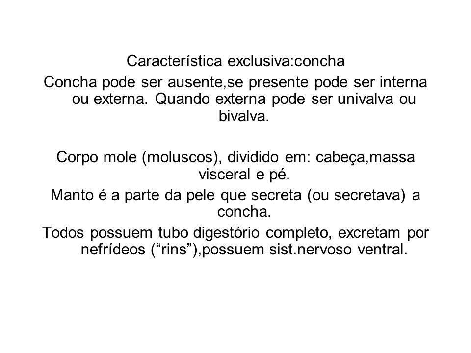 Característica exclusiva:concha Concha pode ser ausente,se presente pode ser interna ou externa. Quando externa pode ser univalva ou bivalva. Corpo mo