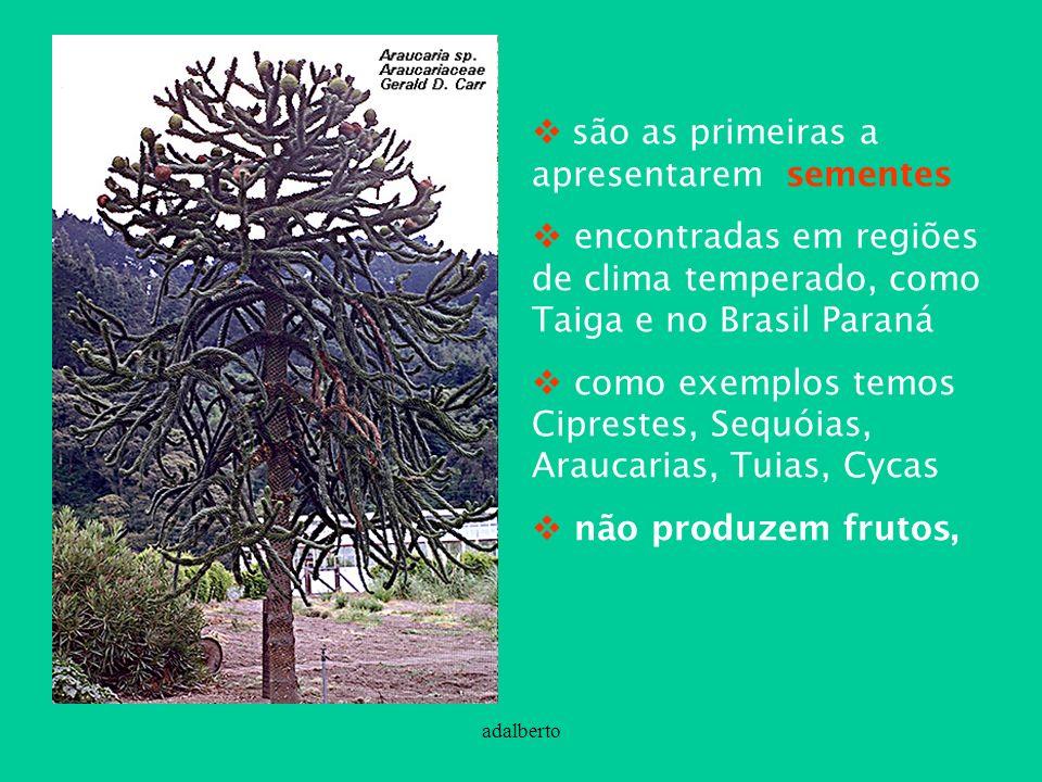 adalberto são as primeiras a apresentarem sementes encontradas em regiões de clima temperado, como Taiga e no Brasil Paraná como exemplos temos Cipres