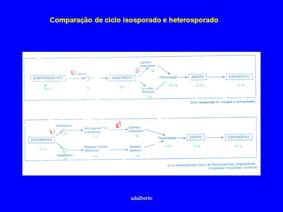 adalberto Comparação de ciclo isosporado e heterosporado