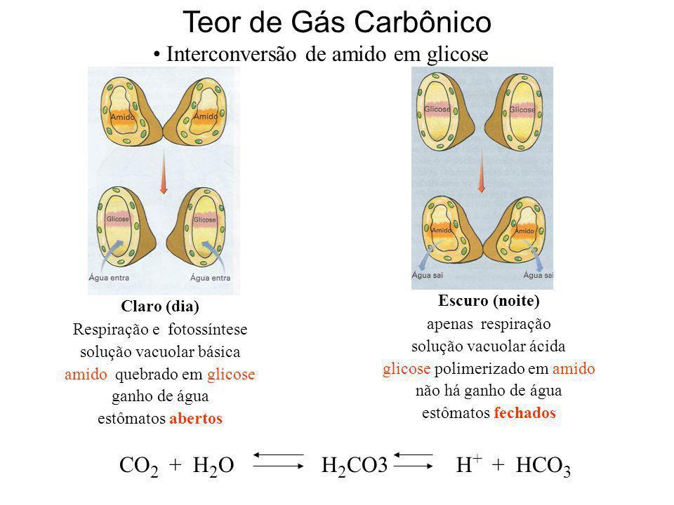 Teor de Gás Carbônico Interconversão de amido em glicose CO 2 + H 2 OH 2 CO3H + + HCO 3 Claro (dia) Respiração e fotossíntese solução vacuolar básica