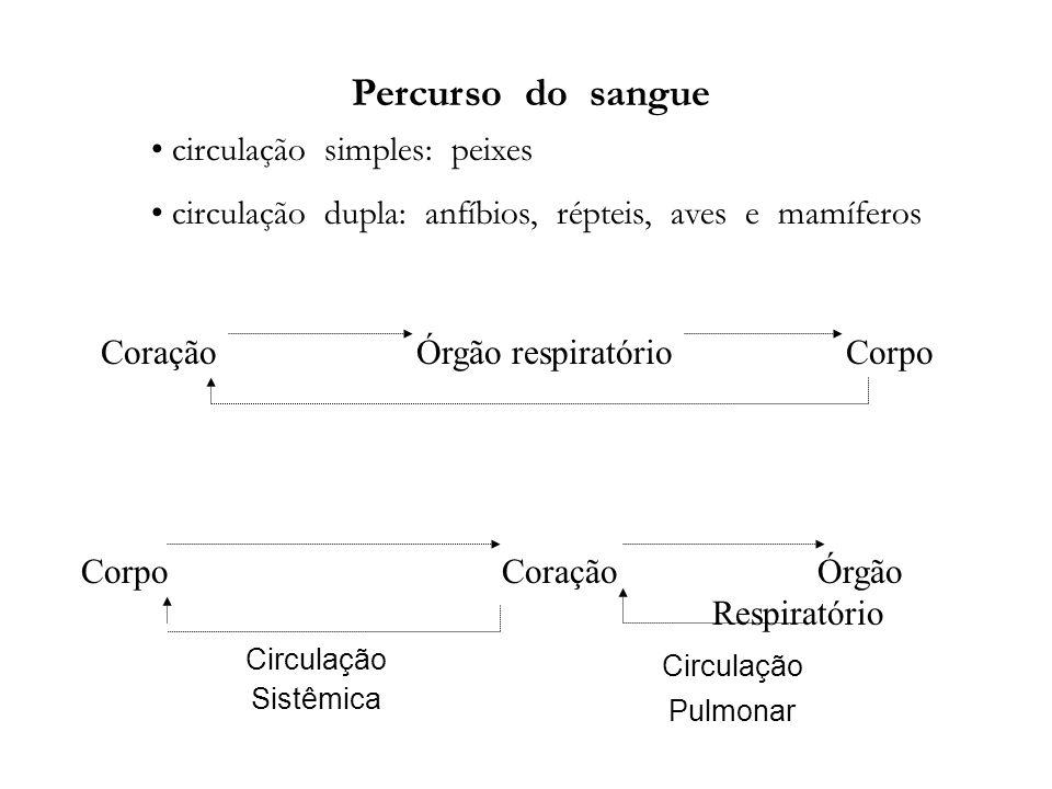 Percurso do sangue circulação simples: peixes circulação dupla: anfíbios, répteis, aves e mamíferos Coração Órgão respiratório Corpo Corpo CoraçãoÓrgã