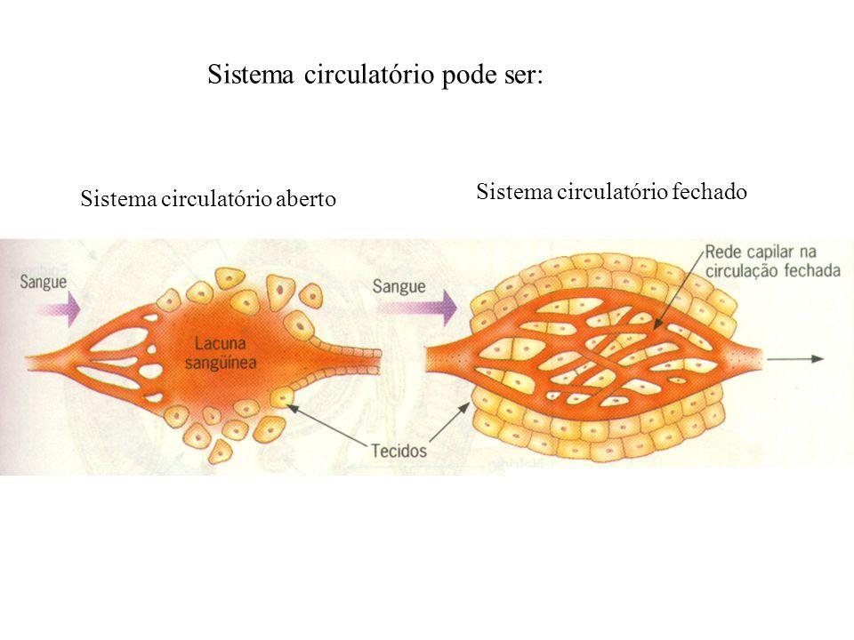 Sistema circulatório aberto Sistema circulatório fechado Sistema circulatório pode ser: