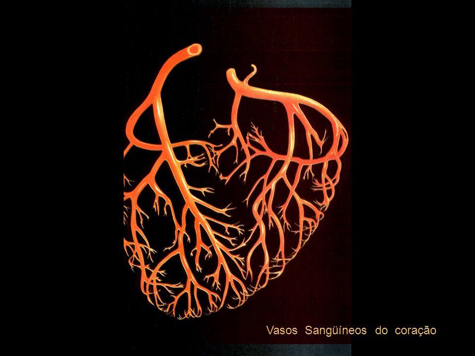 Vasos Sangüíneos do coração