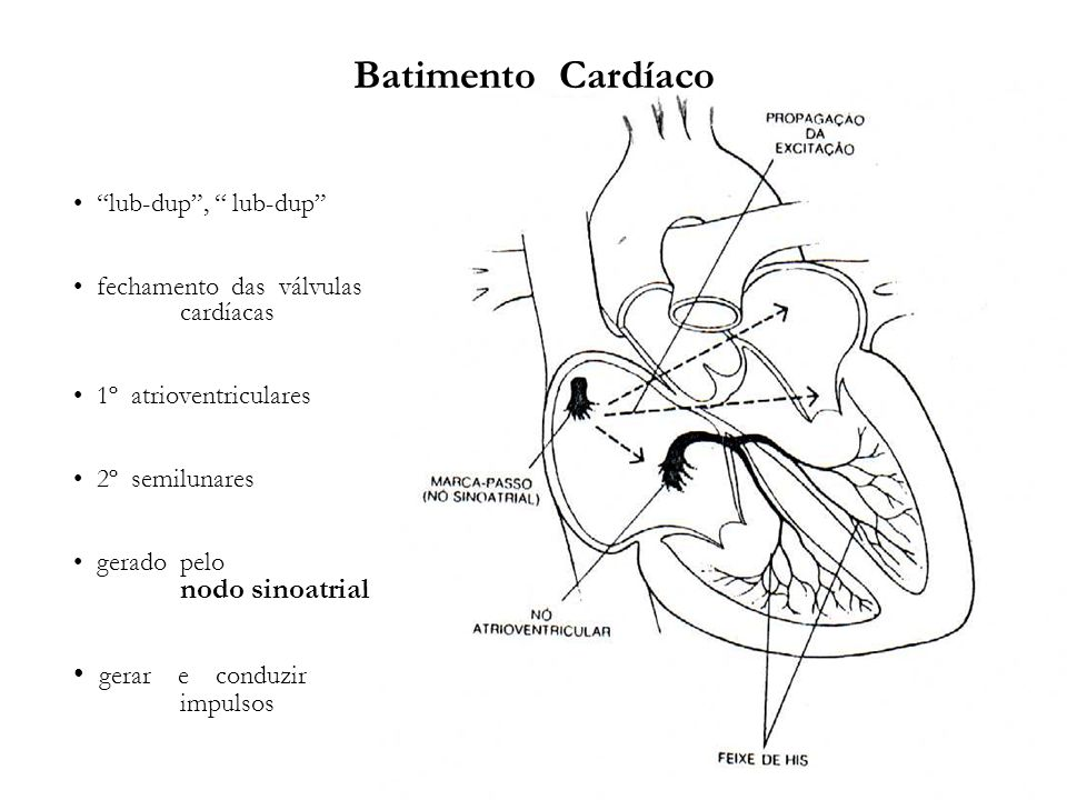 Batimento Cardíaco lub-dup, lub-dup fechamento das válvulas cardíacas 1º atrioventriculares 2º semilunares gerado pelo nodo sinoatrial gerar e conduzi