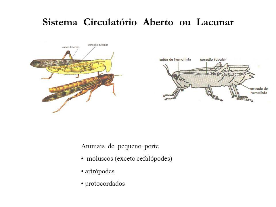 Sistema Circulatório Aberto ou Lacunar Animais de pequeno porte moluscos (exceto cefalópodes) artrópodes protocordados