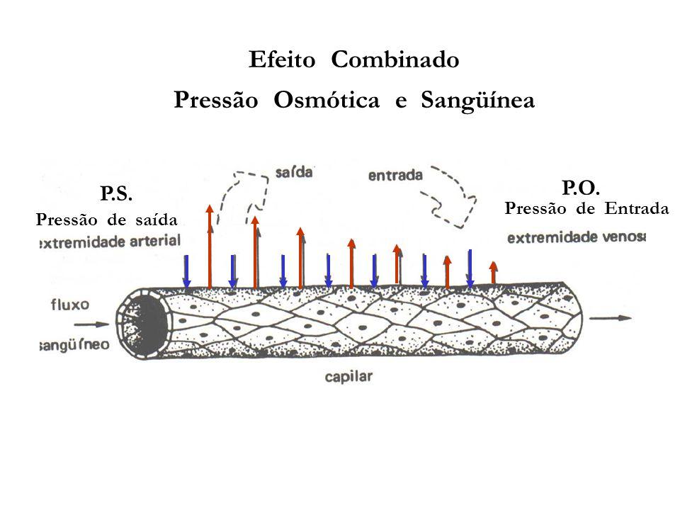 Efeito Combinado Pressão Osmótica e Sangüínea P.S. P.O. Pressão de saída Pressão de Entrada
