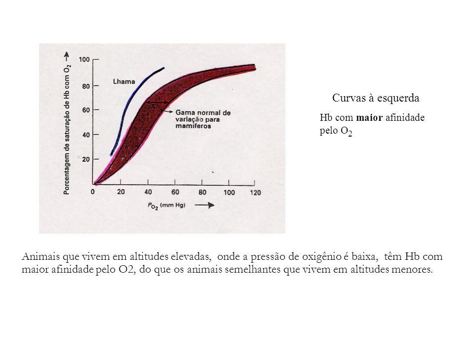 Animais que vivem em altitudes elevadas, onde a pressão de oxigênio é baixa, têm Hb com maior afinidade pelo O2, do que os animais semelhantes que viv