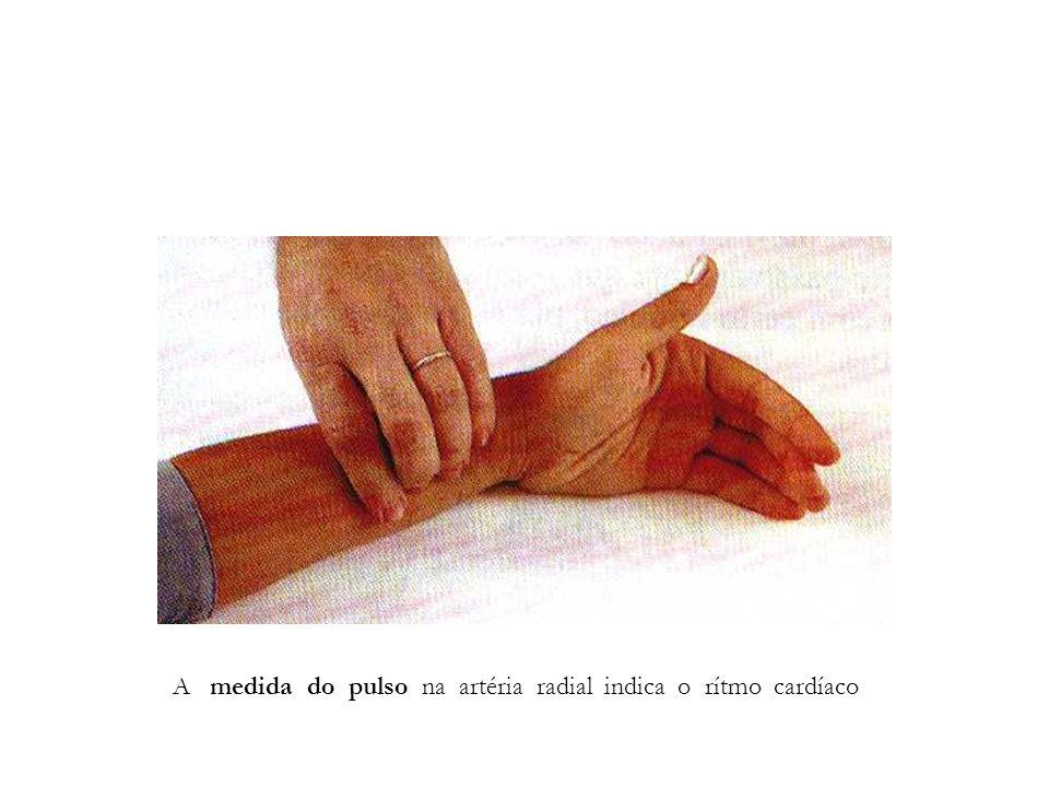 A medida do pulso na artéria radial indica o rítmo cardíaco