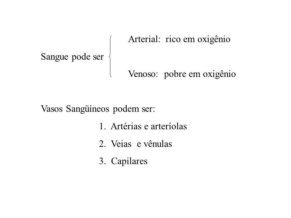 Arterial: rico em oxigênio Sangue pode ser Venoso: pobre em oxigênio Vasos Sangüíneos podem ser: 1. Artérias e arteríolas 2. Veias e vênulas 3. Capila