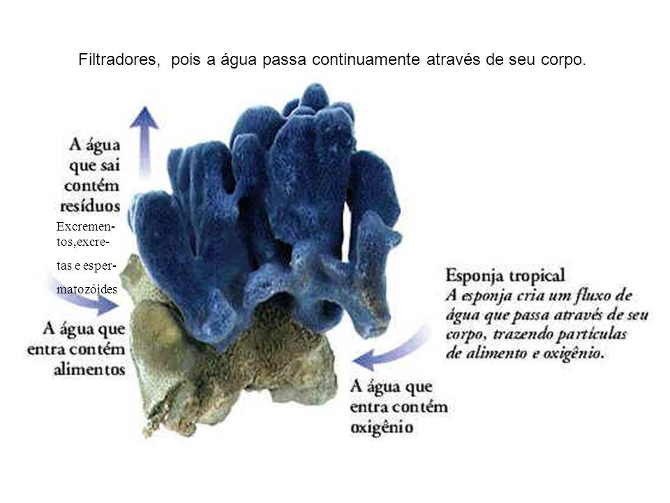 Caracteres gerais do grupo visto presença de poros inauguram a pluricelularidade no Reino Metazoa Células típicas : Coanócitos Sustentação : por espícula ( calcáreas / silicosas ) ou por rede de espongina Hábita : mar e água doce
