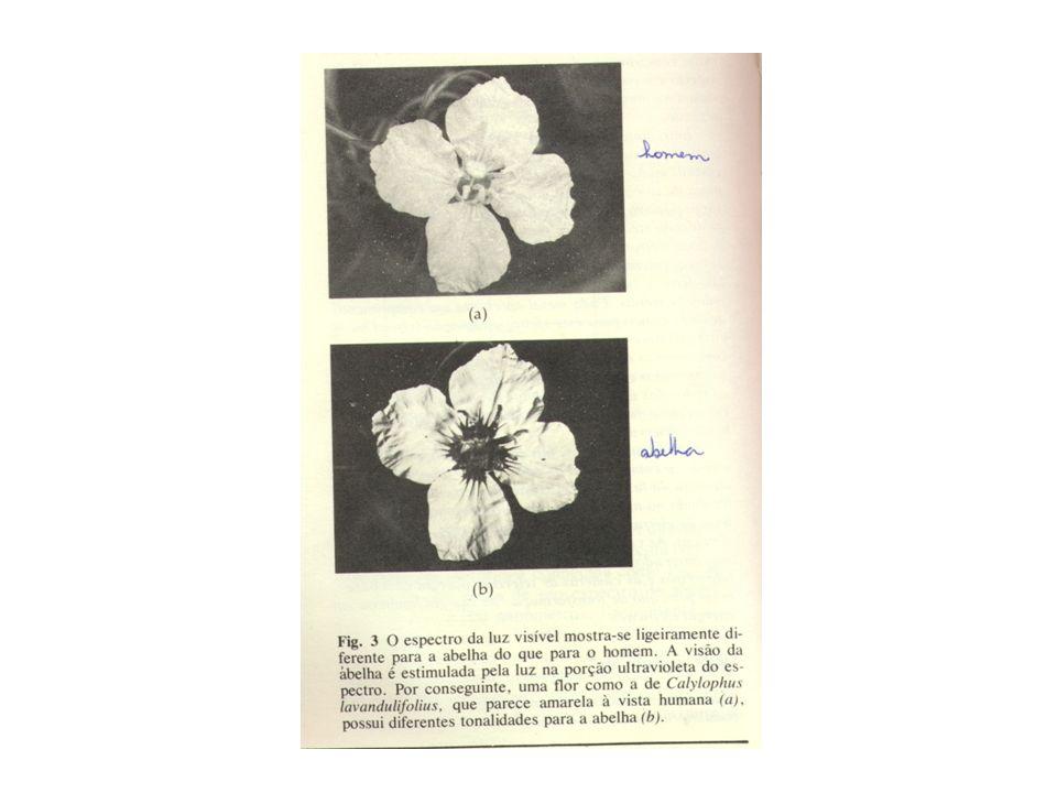 REPRODUÇÃO 1.Reprodução Assexuada Partenogênese: desenvolvimento do óvulo sem ser fecundado.
