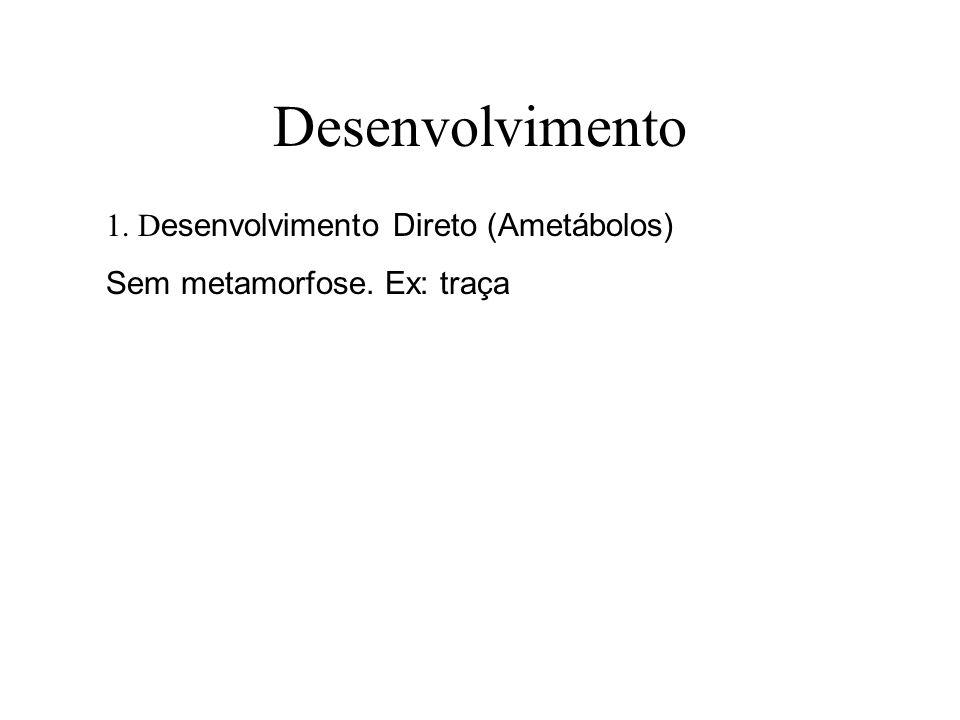 Desenvolvimento 1. D esenvolvimento Direto (Ametábolos) Sem metamorfose. Ex: traça