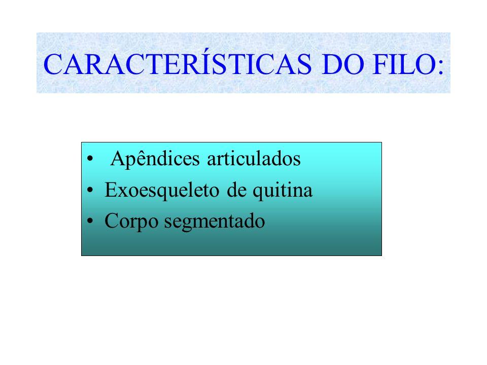 CARACTERÍSTICAS DO FILO: Apêndices articulados Exoesqueleto de quitina Corpo segmentado