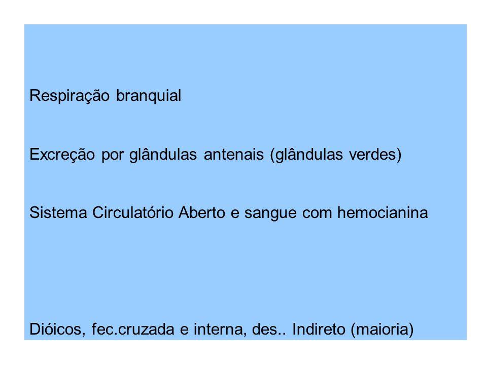 Respiração branquial Excreção por glândulas antenais (glândulas verdes) Sistema Circulatório Aberto e sangue com hemocianina Dióicos, fec.cruzada e interna, des..