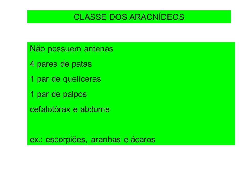 CLASSE DOS ARACNÍDEOS Não possuem antenas 4 pares de patas 1 par de quelíceras 1 par de palpos cefalotórax e abdome ex.: escorpiões, aranhas e ácaros