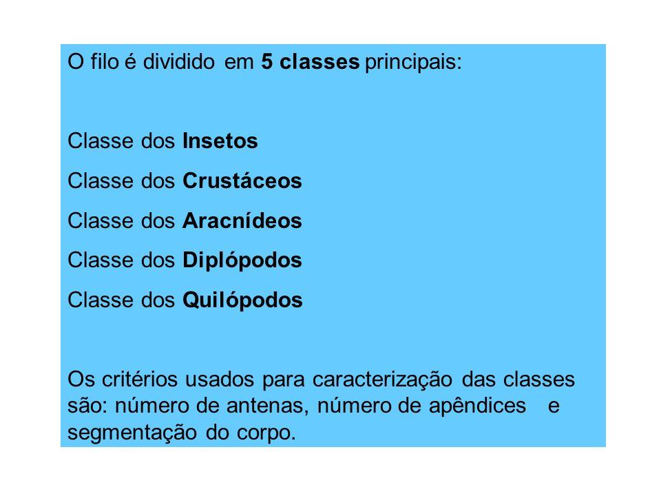 O filo é dividido em 5 classes principais: Classe dos Insetos Classe dos Crustáceos Classe dos Aracnídeos Classe dos Diplópodos Classe dos Quilópodos Os critérios usados para caracterização das classes são: número de antenas, número de apêndices e segmentação do corpo.
