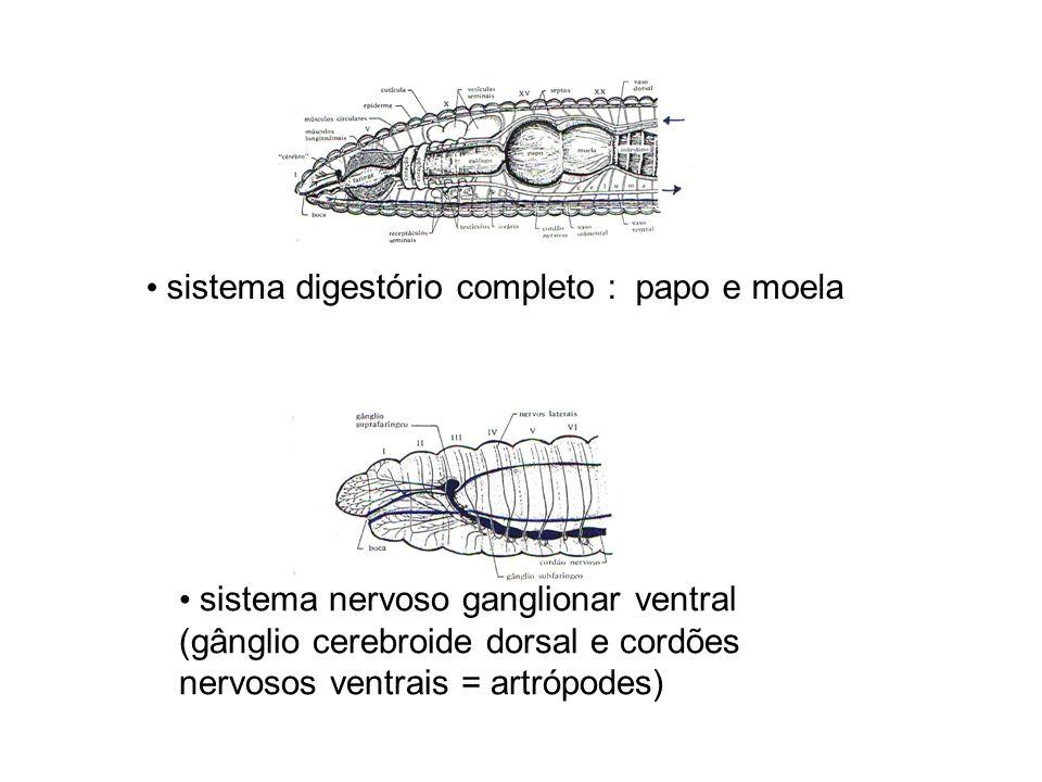 sistema digestório completo : papo e moela sistema nervoso ganglionar ventral (gânglio cerebroide dorsal e cordões nervosos ventrais = artrópodes)