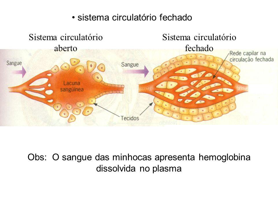 Sistema circulatório aberto Sistema circulatório fechado Obs: O sangue das minhocas apresenta hemoglobina dissolvida no plasma sistema circulatório fe