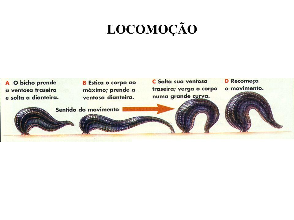 LOCOMOÇÃO